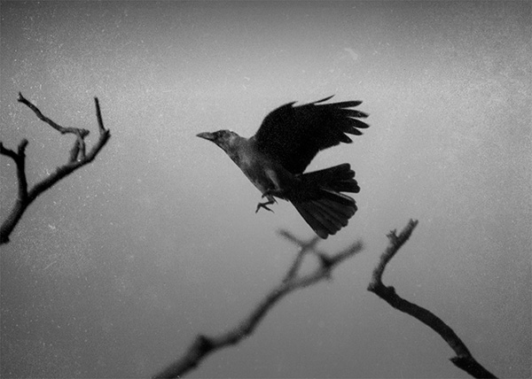 The Crow / Abul Kalam Azad / Late 70s